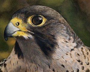 Erik Wessels Wildlife Art